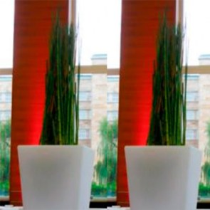 Equisetum-in-Slide-Vase.jpg